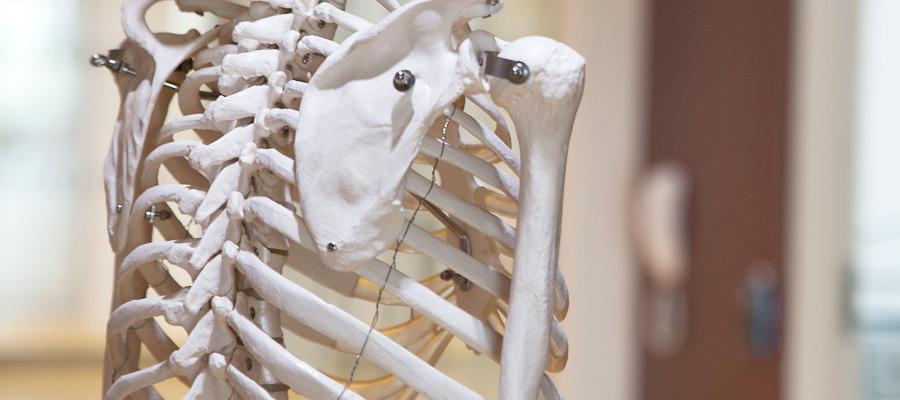 Ortopedi - Henrik Malchau - skelett